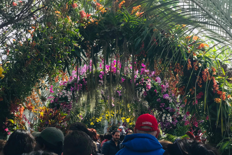 botanical gardens | gardens | botanical | winter | winter activities | garden activities