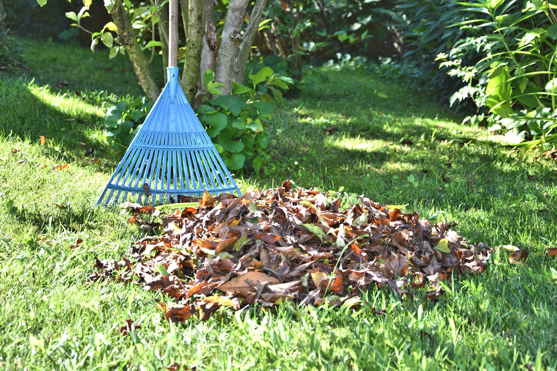 fall gardening mistakes | fall gardening | gardening | gardening mistakes | garden | fall | fall mistakes