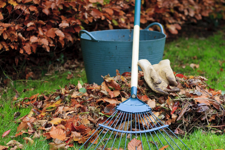 October | October gardening | gardening | winterize | winterize your garden | fall | fall gardening | gardener's almanac