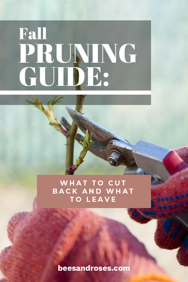 If you take away anything from this Fall pruning guide you should know what to cut back and what to leave