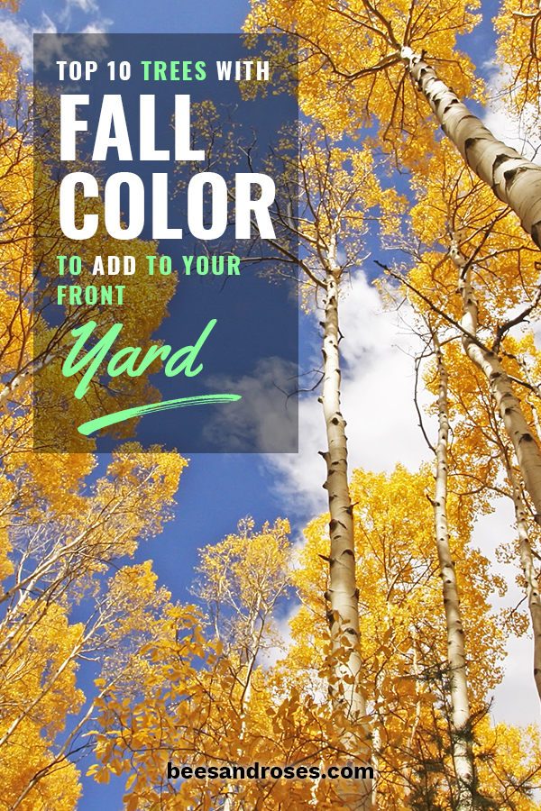 Looking for some trees to plant in your front yard that have fall color. Perfect! I've got a list for you that will make you happy with beautiful fall colors. These are the top ten trees you want to plant if you are looking for fall color. Deep reds, yellows and more could be in your yard. They just make your yard POP. Go ahead, take a look. Let me know which one is your favorite.