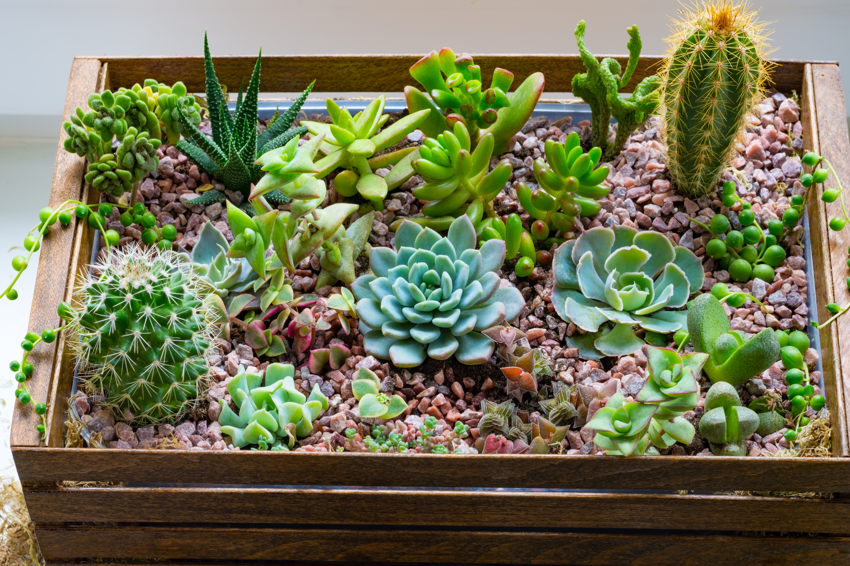 Garden Subscription Boxes | subscriptions | subscription boxes | garden | gardens | garden ideas