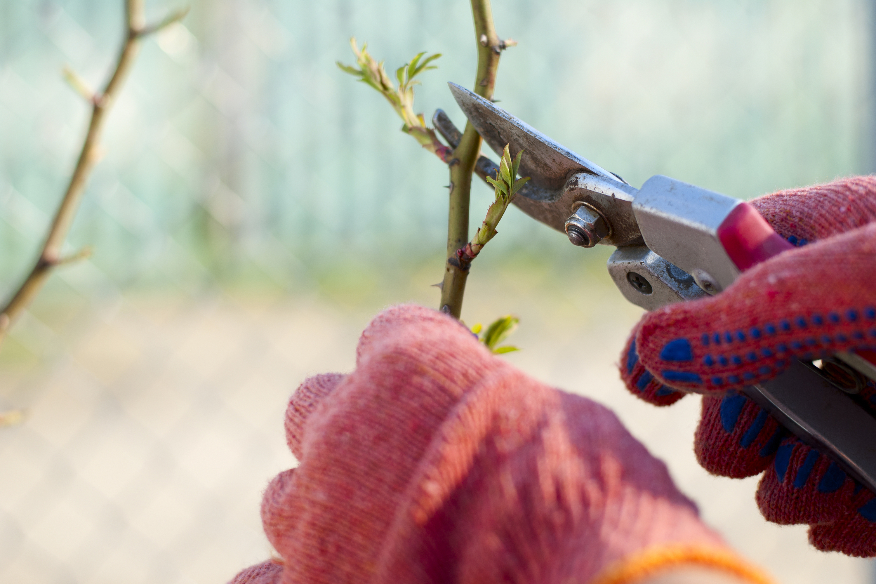 Fall pruning is one of the best things you can do for your plants
