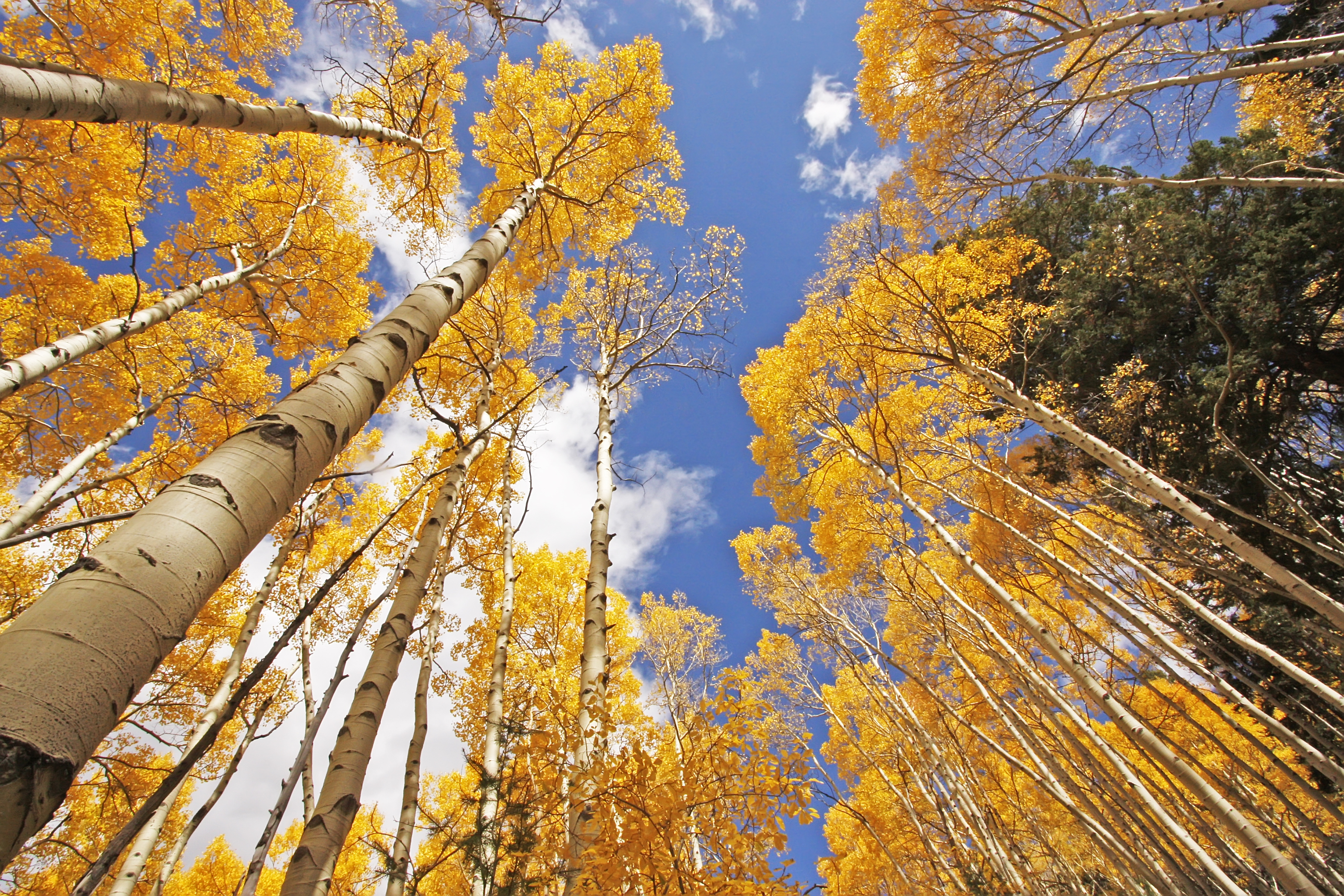 The beautiful colors of fall can't be beat! These trees with fall color are beautiful and should be added to your yard.