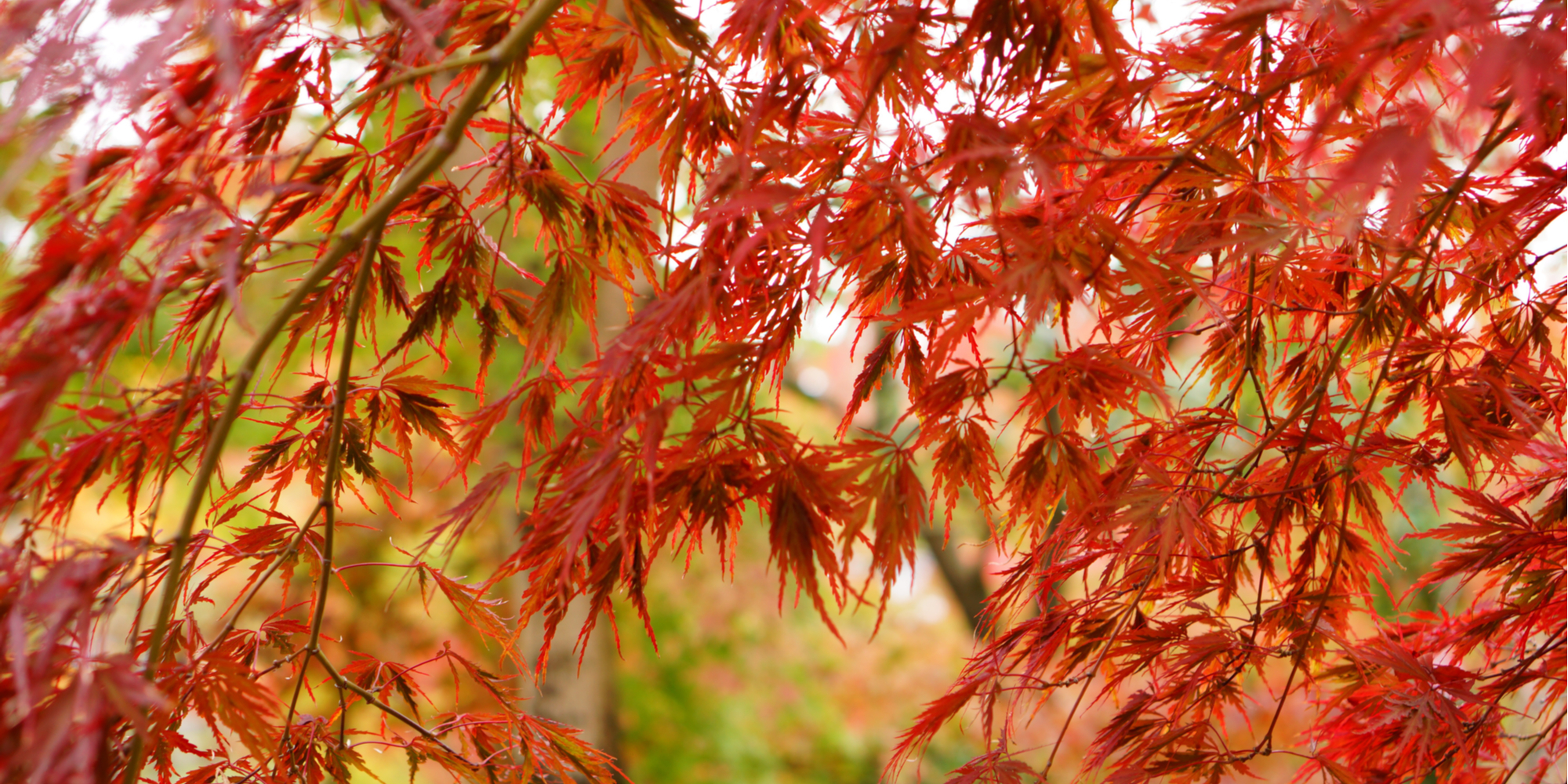 If you want to add the beautiful colors to your yard, you will need these trees with fall color. You will fall in love with them!