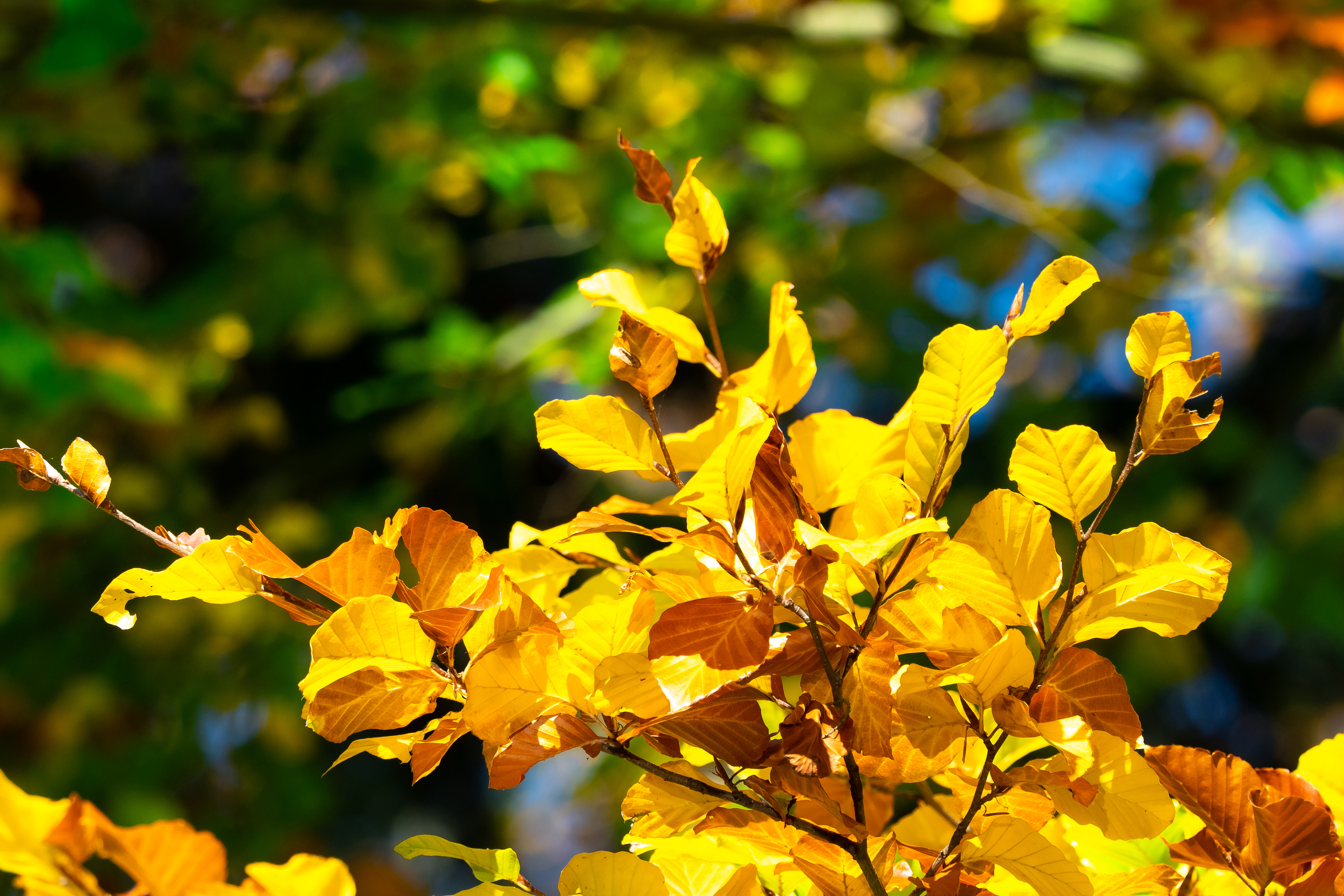 Is there anything better than the beautiful colors of fall? These trees with fall color will be the perfect addition to your yard!