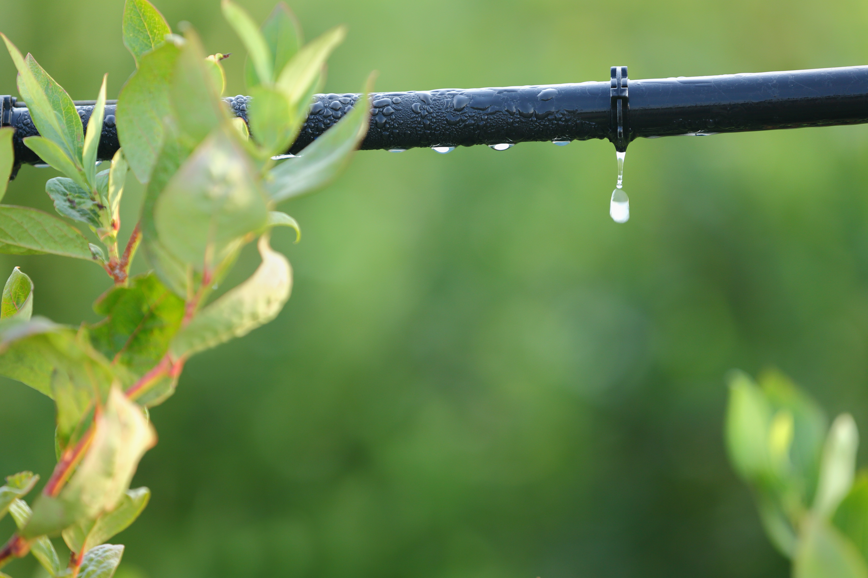 If you're looking to DIY a drip irrigation system, it's easy to do! Here's everything you need to know about making a drip irrigation system.