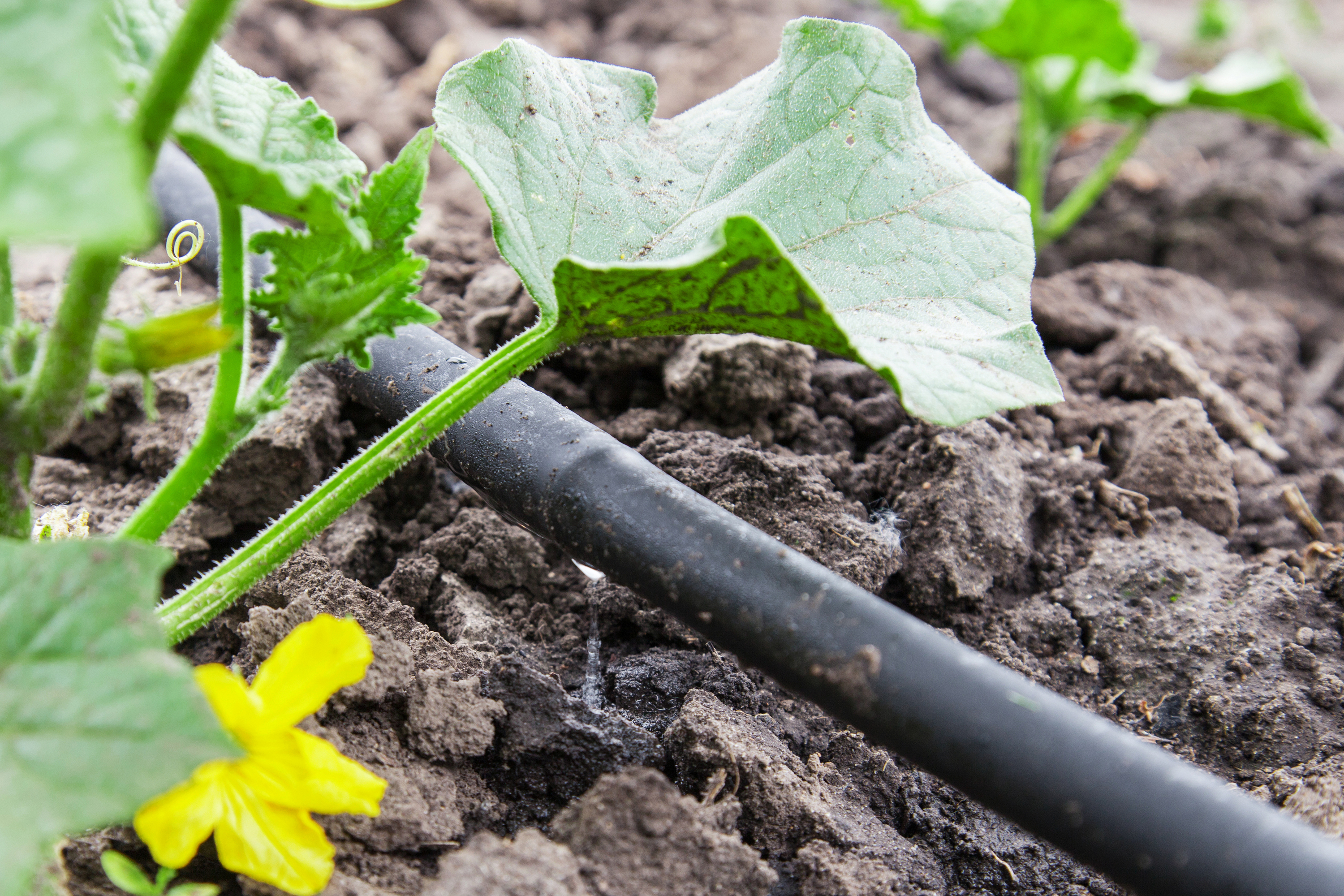 Having a drip irrigation system is one of the best things you can have in your garden. Learn all about drip irrigation systems here.