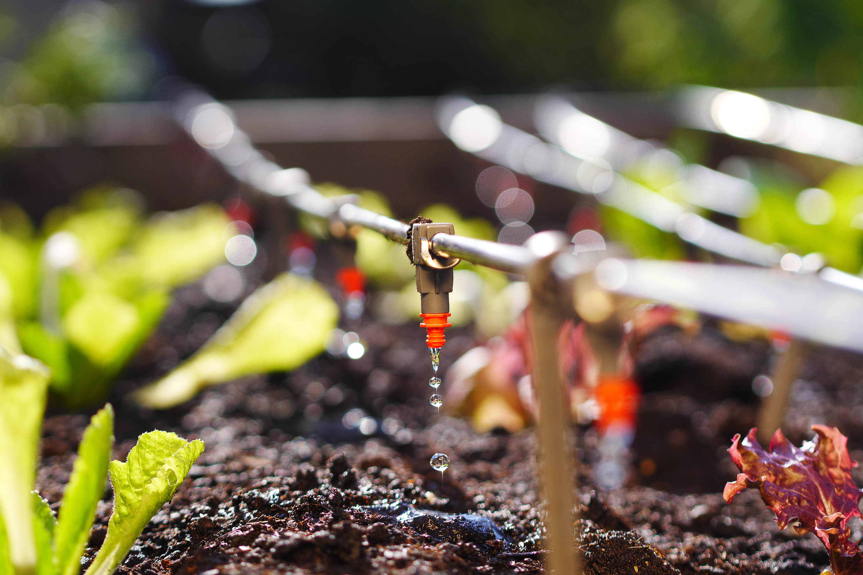 Having a drip irrigation system is so important for your yard. Here's how you can DIY a drip irrigation system for your garden.