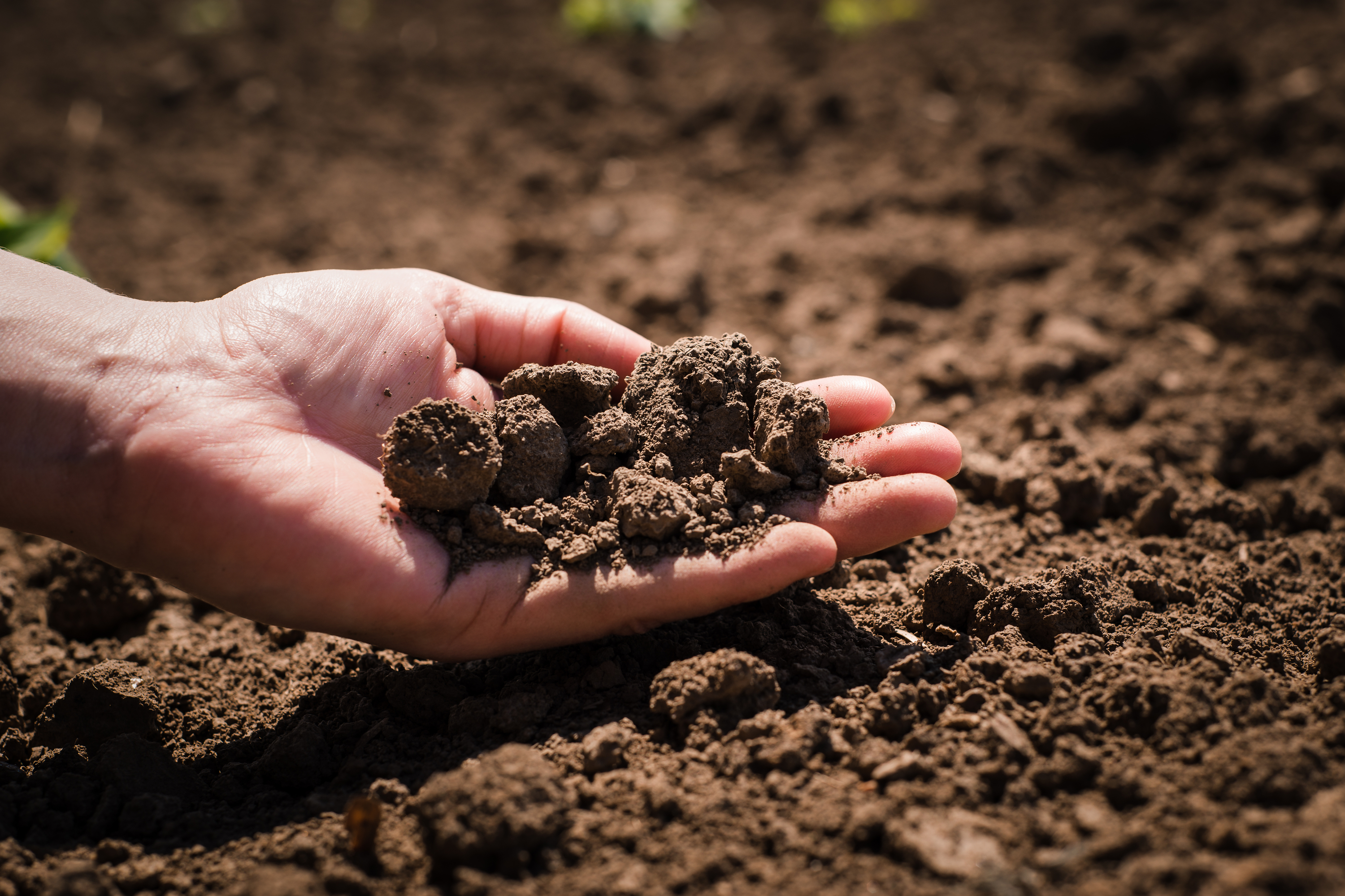 soil that is lacking nutrients