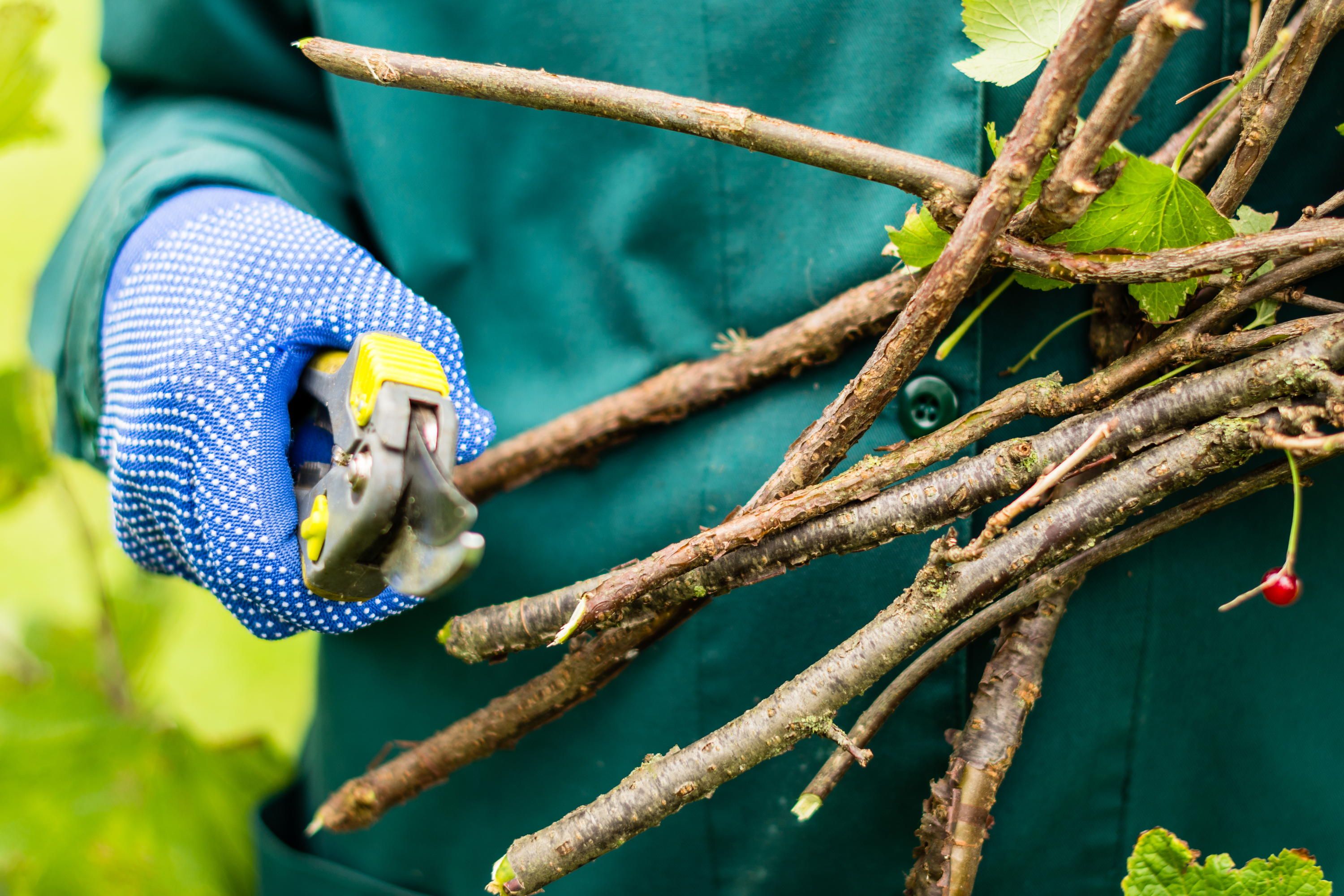If you want to make Spring time a lot easier on yourself, make sure you do your fall pruning this year