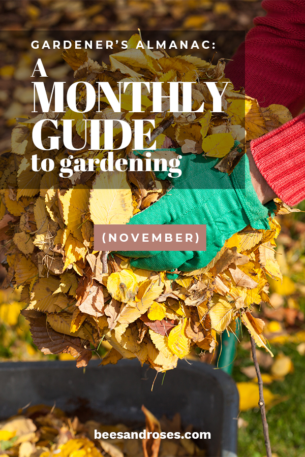 I get it! November is usually really cold and you are wondering what in the heck you could do in your garden. It's a fair question but one that Bees And Roses can answer. Take a look at the gardening ideas for November. You might be surprised what you can do. So, get to it. Why not enjoy one more month of gardening. #gardeningtips #novembergardeningtips