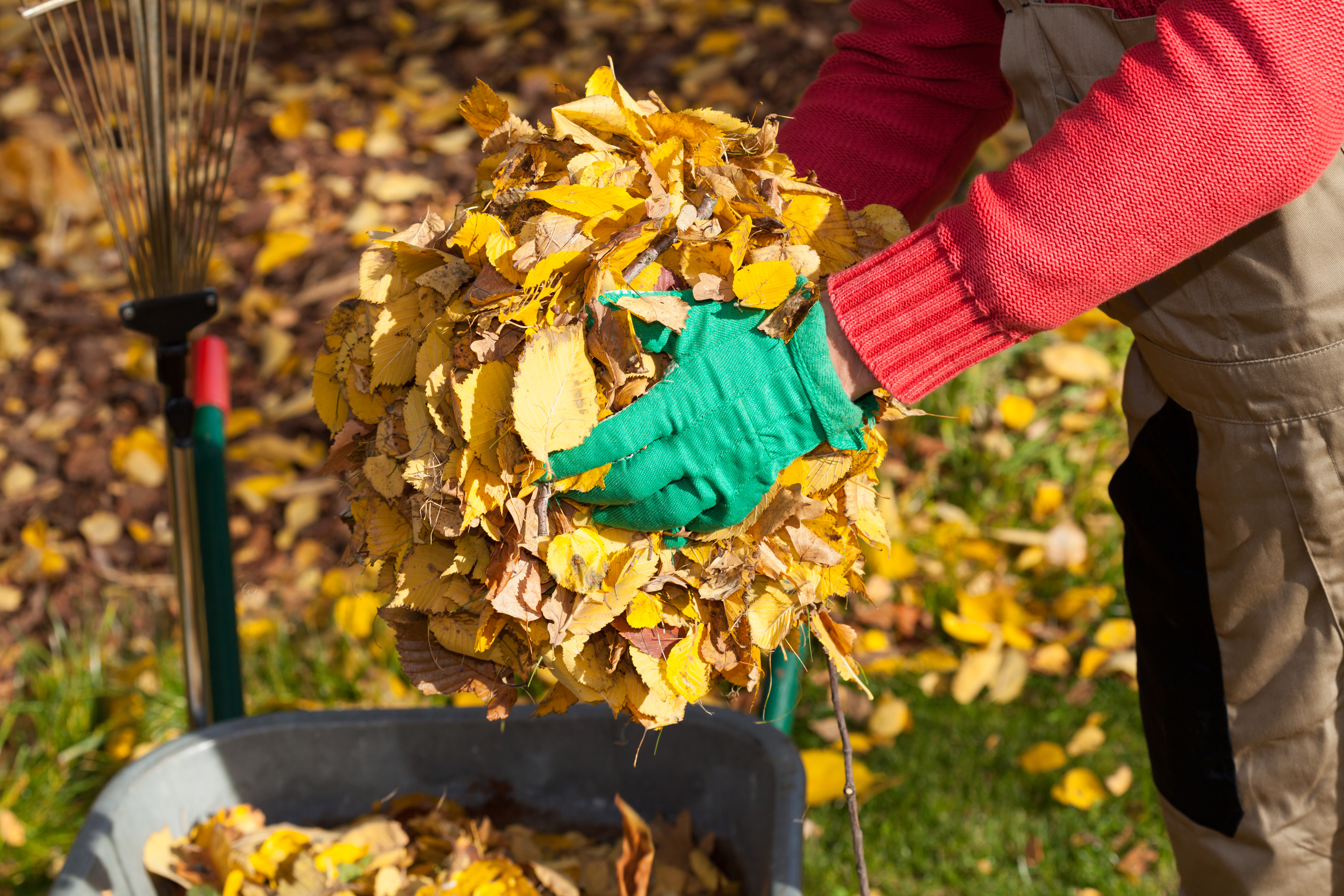 November is the perfect month to start preparing your compost. Read this post on the best gardening tips for the month of November.