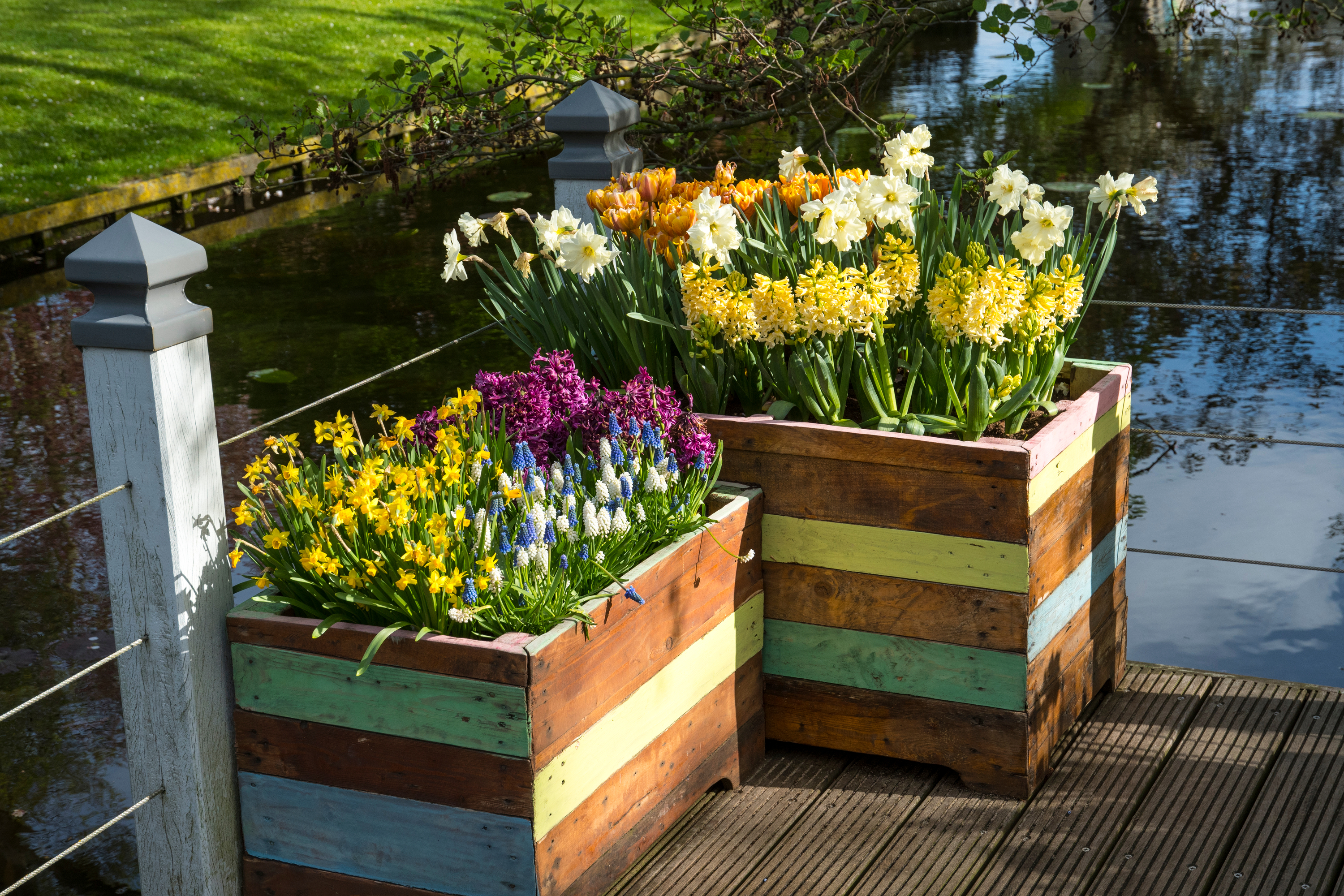 If you want to make the most beautiful pots for your garden, try layering bulbs in the pot. You will love the way they look all year long.