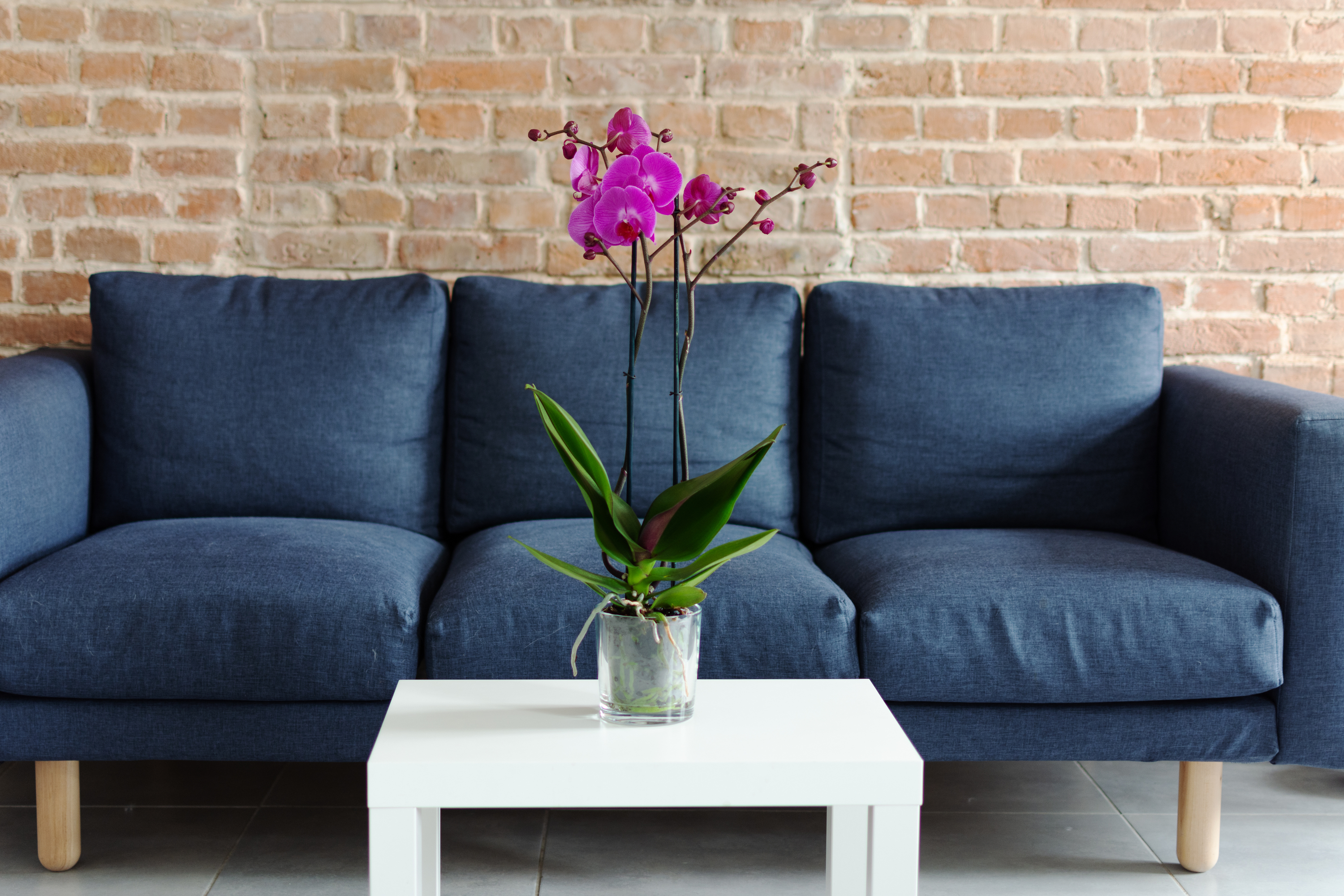 If you own a cat and you want houseplants, make sure you know which houseplants that are safe for cats. You can't ever go wrong with orchids.