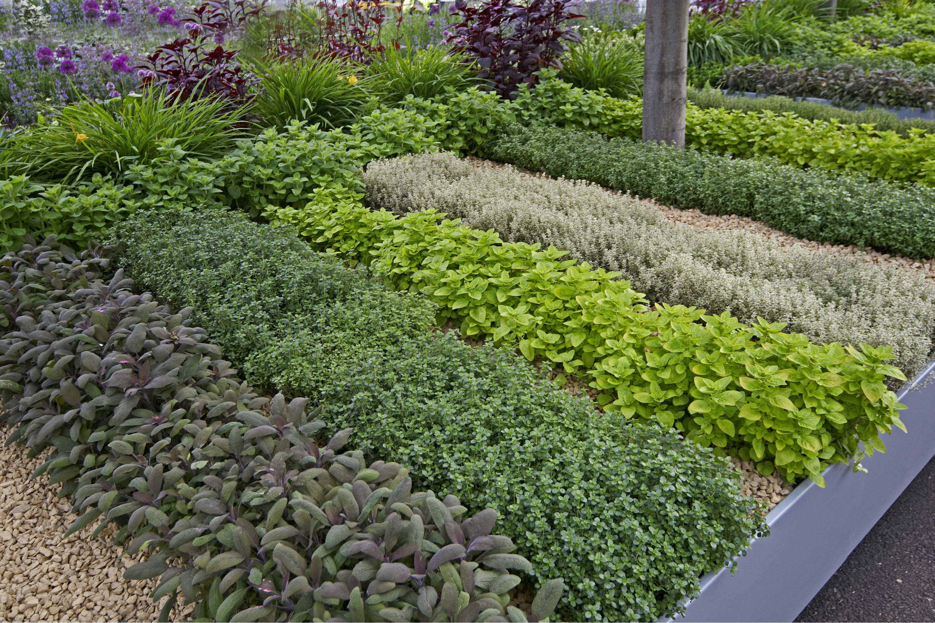 Are you planting a herb garden? You'll want to know these tips for companion planting herbs. These tips will make sure your herbs grow as well as possible.
