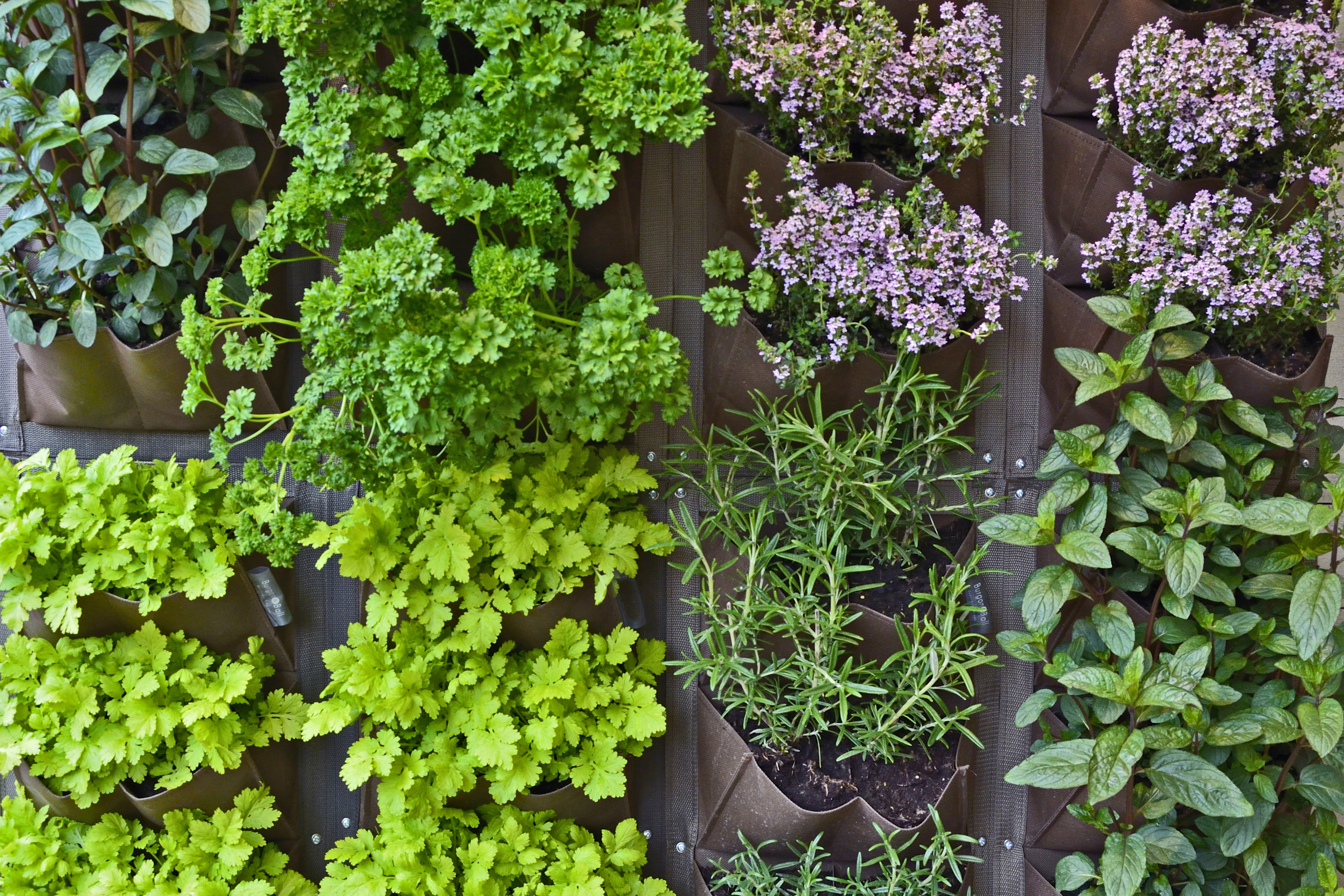 Are you familiar with companion gardening? It allows your plants to grow together as best as possible. Here's everything you need to know about companion planting herbs.