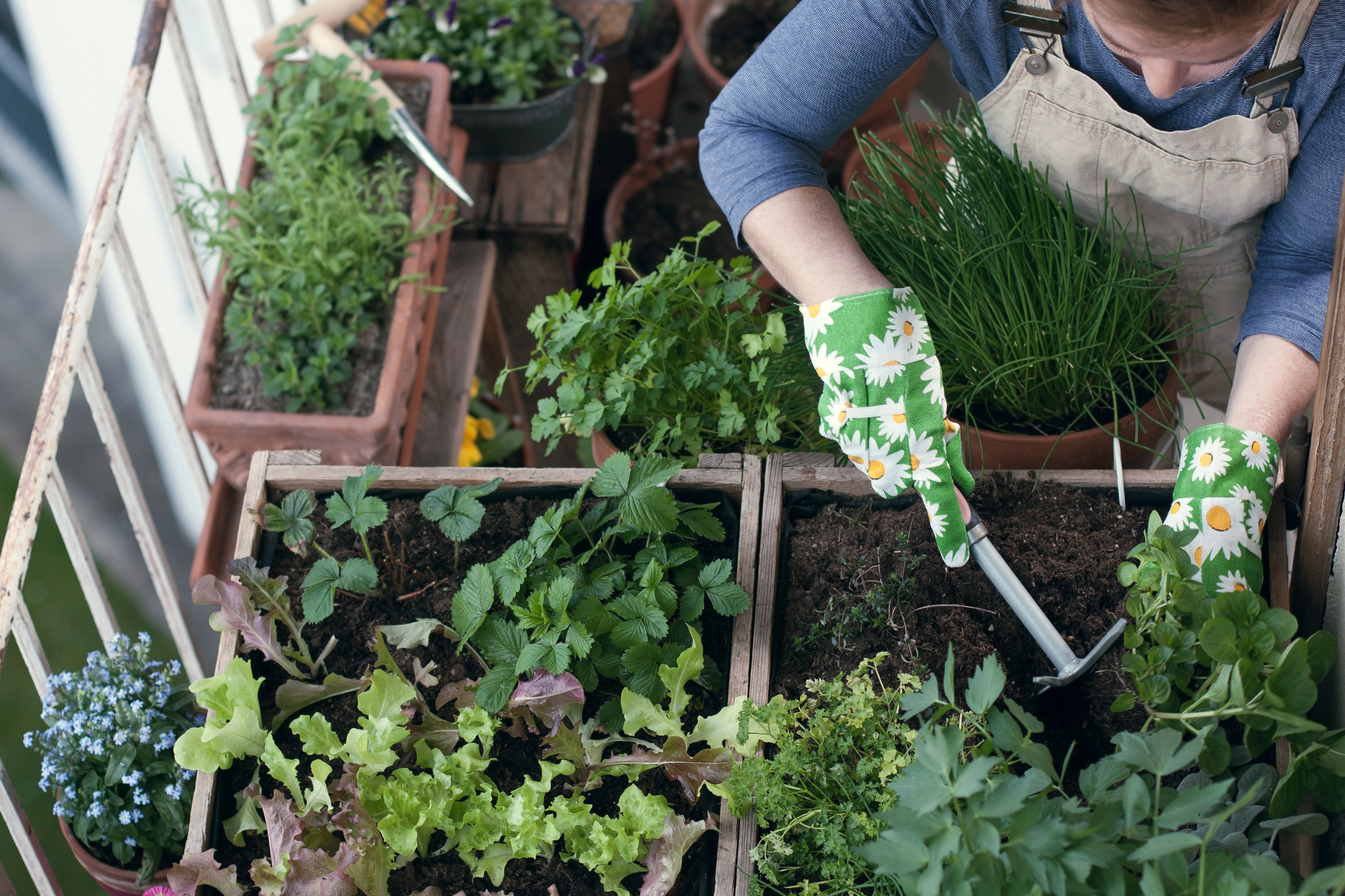 Companion gardening makes sure your plants grow as well as possible. If you're planting a herb garden, you'll want to know these tips for companion planting herbs.