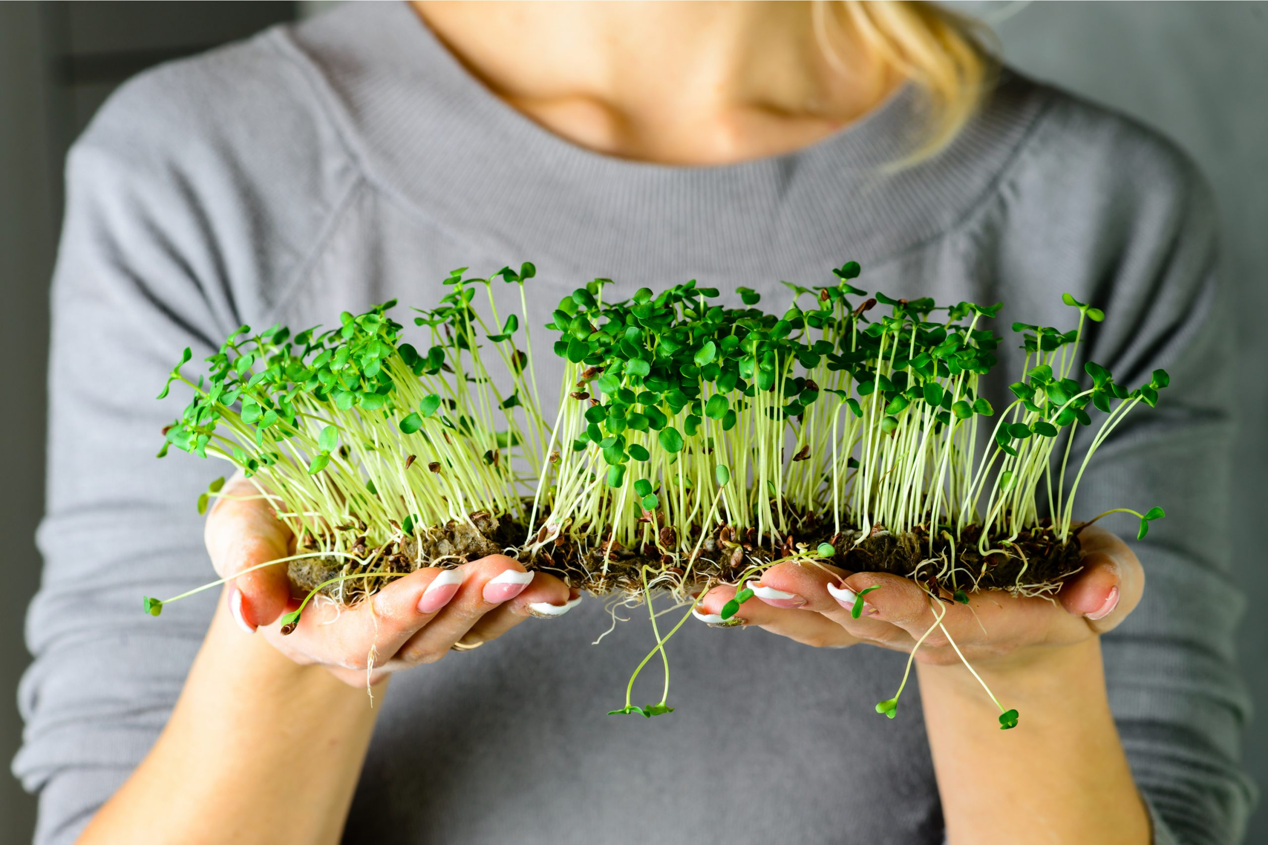 Get ready for the warmer months ahead with a few of these super easy ideas for growing microgreens indoors. You can even get kits for beginners on amazon.