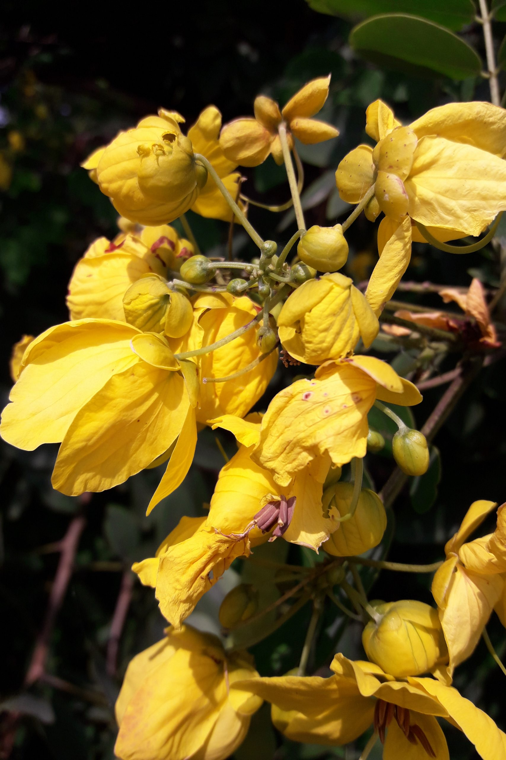 Have you ever heard of nitrogen fixing plants? If not, you are about to be completely amazed! You will love the way they transform your garden.