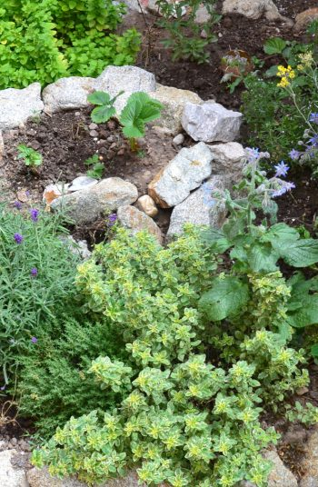 Creating your own permaculture design in your backyard is relatively easy, believe it or not. Creating urban permaculture gardens is a specific skill that is great to have because permaculture designs are created to support almost all of the needs of a family. Make sure to separate your garden into zones.