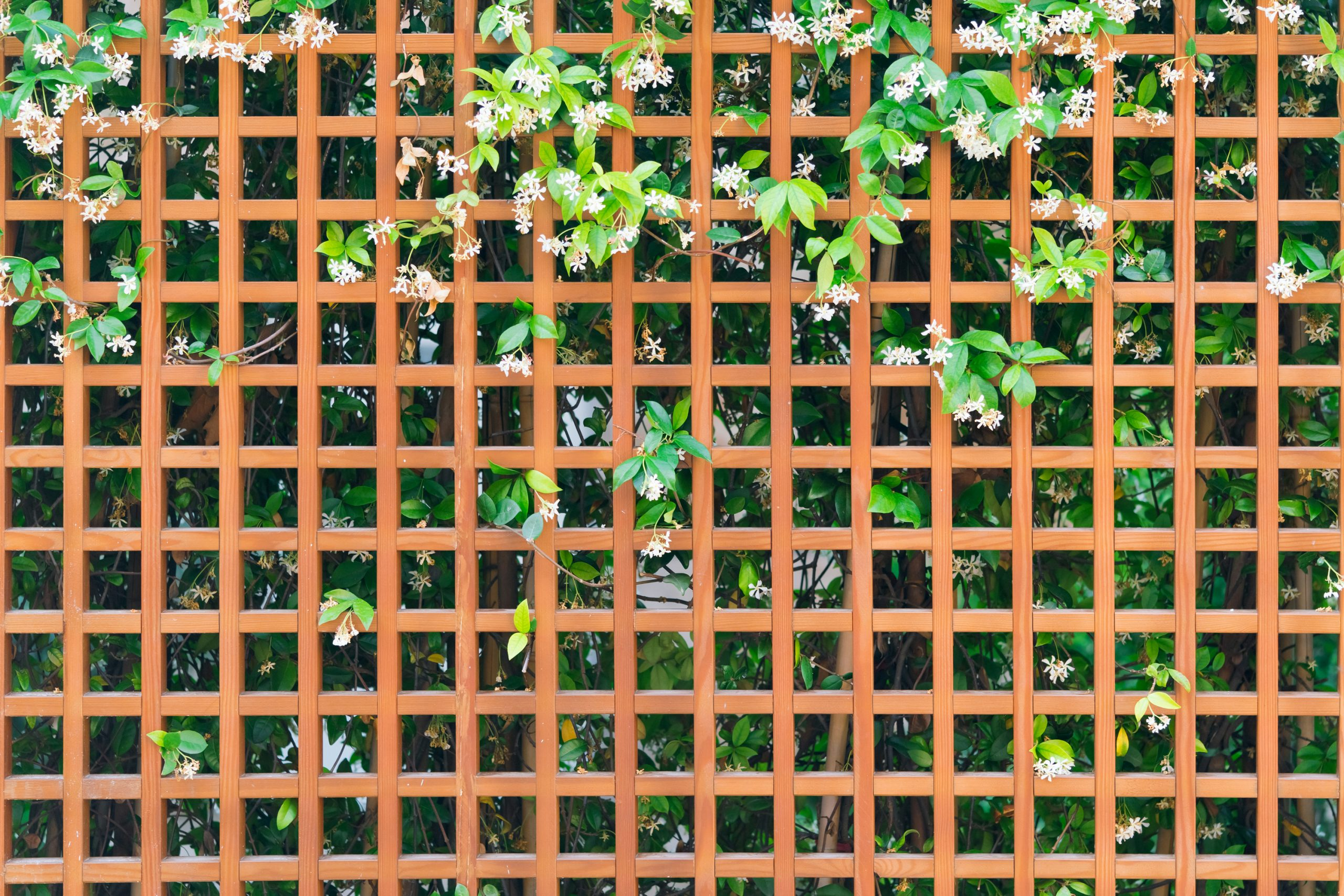 """I've always loved the look of greenery growing up some kind of trellis. It has a very """"Secret Garden"""" feel to it. If you're dying for a magical look like this in your own backyard, you can make your own trellis for a fraction of the price. Keep reading below for some of the best DIY trellis ideas on the internet!"""