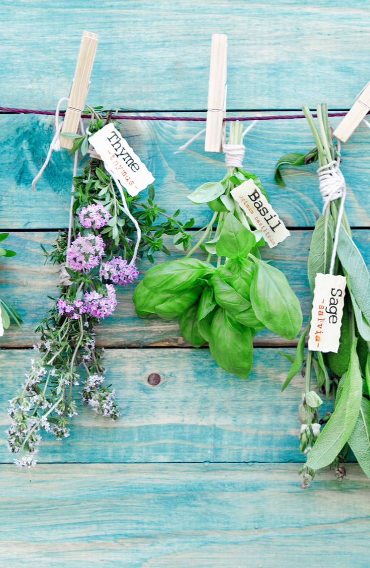 Three types of herbs hanging to dry. Thyme, Basil, and Sage. Herb Gardening