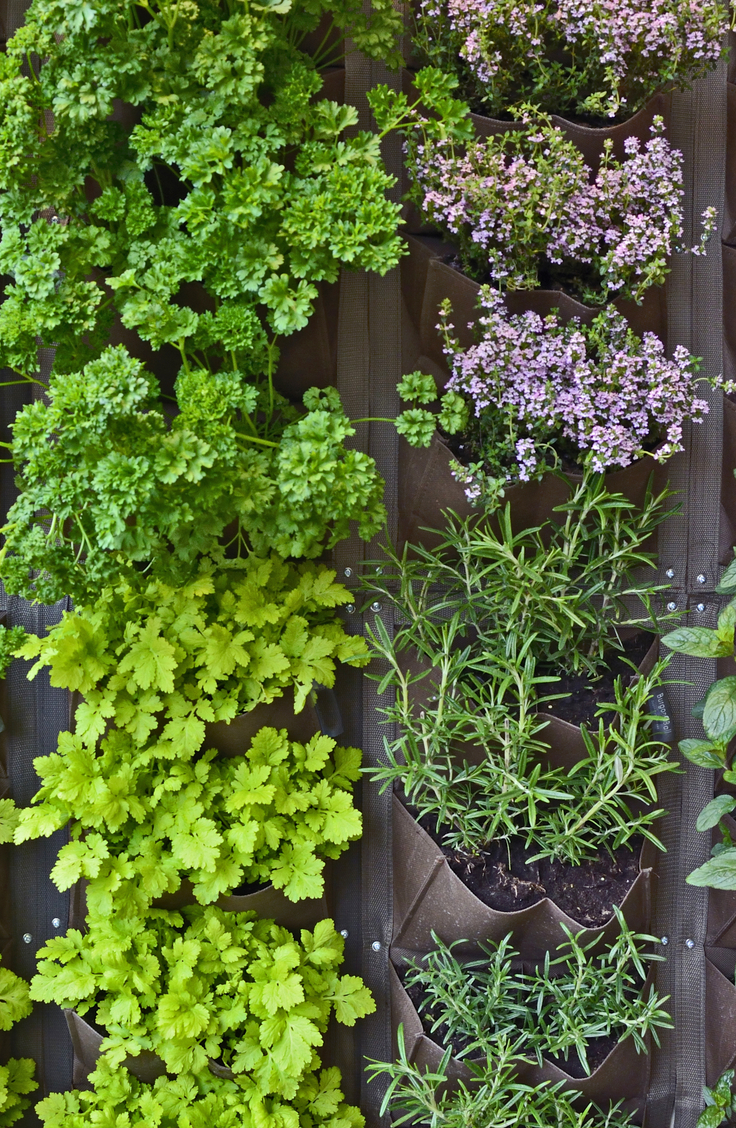 Herb gardening. Herbs planted in vertical pouches that hang on a fence.