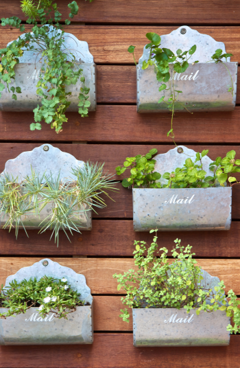 Victory Gardens are a blast from the past. They emerged during World War 2 as a way to help with the shortage of food during the war. They have once again become popular so why not give it a try. You can even make them as trendy and modern as you want!