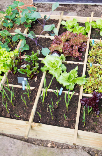 Just about anyone can learn how to garden, you just need the right tools and tricks for the job! If you're new to gardening, check out these helpful gardening tips for beginners.