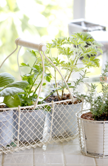 I love to spend as much time in the vegetable garden as I possibly can. I affectionately refer to my garden as my happy place, and that's because it is. I'm even a certified master gardener. If you love to garden like me, check out these great vegetable gardening ideas from a certified master gardener. You will love them!
