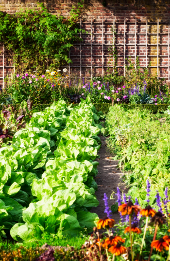 I love to spend as much time in the vegetable garden as I possibly can. I affectionately refer to my garden as my happy place, and that's because it is. I'm even a certified master gardener. If you love to garden like me, check out these great vegetable gardening ideas from a certified master gardener. Your garden will thank you!