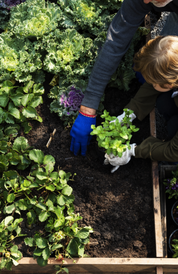 Just about anyone can learn how to garden, you just need the right tools and tricks for the job! If you're new to gardening, check out these helpful gardening tips for beginners. They will change the way you look at gardening.