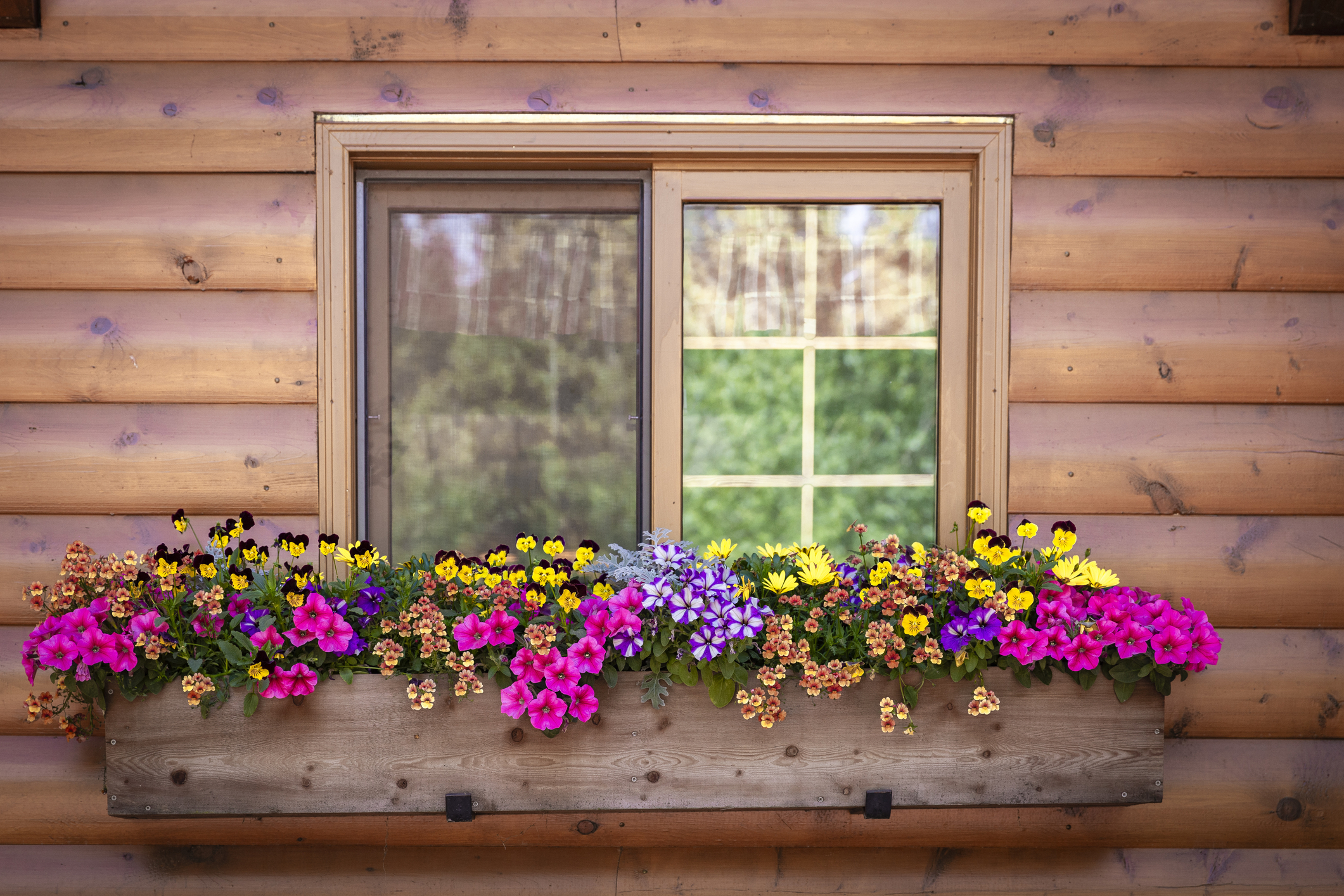 Putting together beautiful flower combinations is one of my favorite parts of landscaping. And now that Summer is in full swing, why not get your home looking beautiful? All you need are these great ideas for flower combinations! You will love them!