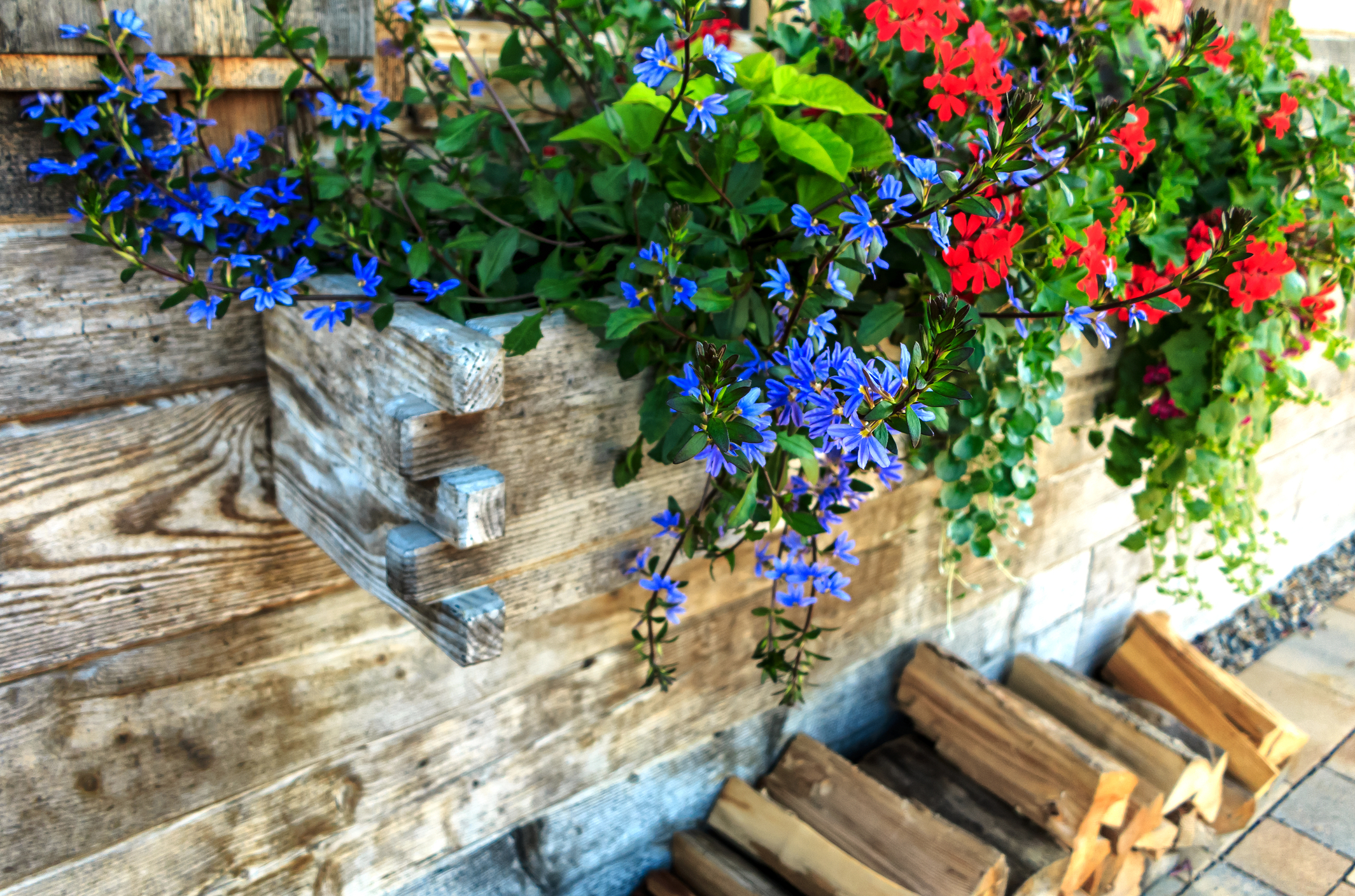 Putting together beautiful flower combinations is one of my favorite parts of landscaping. And now that Summer is in full swing, why not get your home looking beautiful? All you need are these great ideas for flower combinations! Check them out!