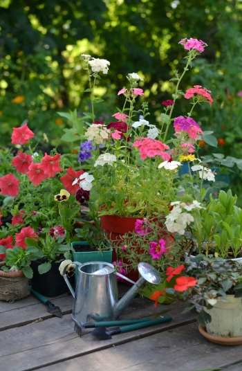 Putting together beautiful flower combinations is one of my favorite parts of landscaping. And now that Summer is in full swing, why not get your home looking beautiful? All you need are these great ideas for flower combinations!