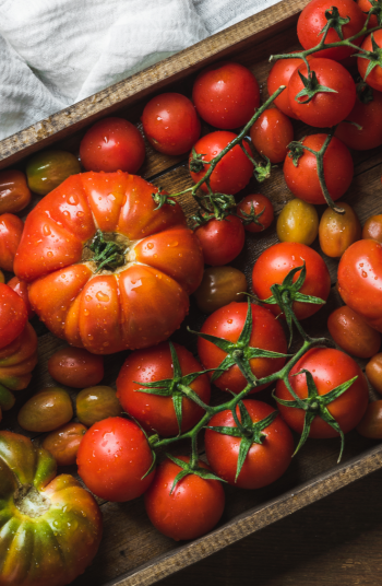 Tomato plant diseases are the absolute worst. You can go from having a healthy crop to having a very sick crop in no time. However, if your plant is sick there are a few things you can do about it. You definitely want to know these tips!