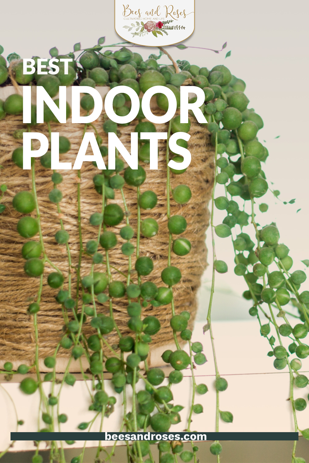 Indoor plants are all the rage this year and I can't wait to see my friends all develop their houseplant collection. These are some of my favorite houseplants of the year, so why not get started growing them ASAP? #plantcare #indoorplants #beesandrosesblog