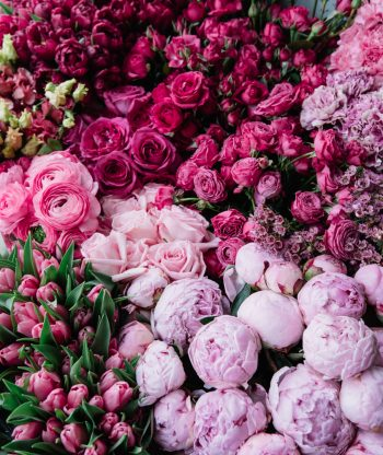 Do you love pink carnations? Whether you like Peonies, Geranium, or another variety, the stunning pink perennial flowers on this list are great for any landscape.