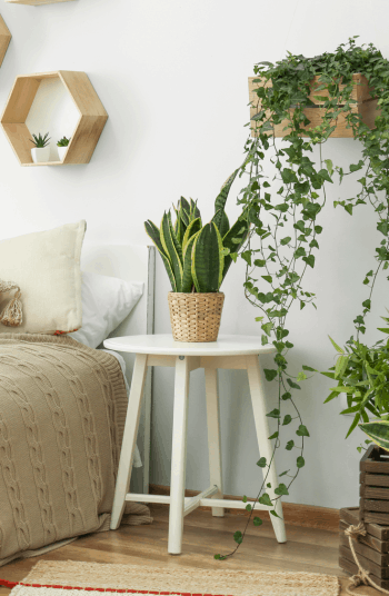 If I am being completely honest with my readers, I love indoor plants WAY more than I like outdoor plants. Not only do they brighten up a home, but they are a great way to keep in touch with your green thumb during the winter months. Some of these plants even love low light!