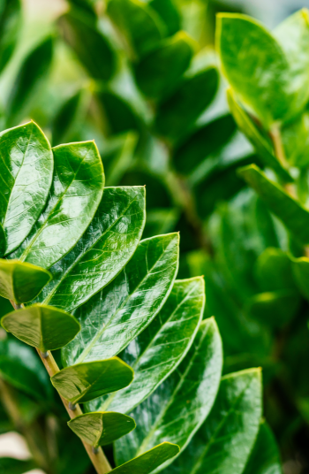 If I am being completely honest with my readers, I love indoor plants WAY more than I like outdoor plants. Not only do they brighten up a home, but they are a great way to keep in touch with your green thumb during the winter months. Some of these plants will even help purify your air!
