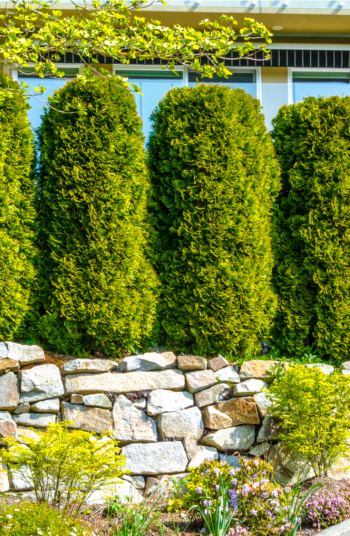 A good fence is important to any yard, privacy-wise. But the unfortunate reality is that it can be difficult to landscape along a fence! Shrubs are always a good idea! Check out these awesome backyard landscaping ideas along fences to complete your space.
