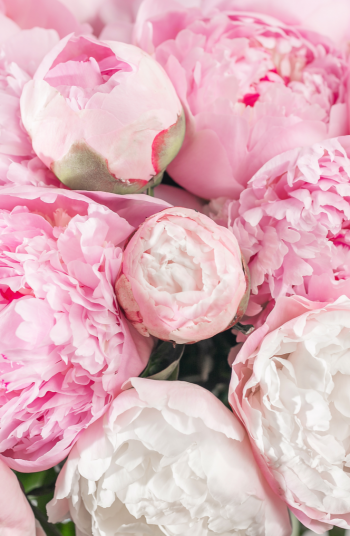 Do you love beautiful peonies? Whether you like Peonies, Geranium, or another variety, the stunning pink perennial flowers on this list are great for any landscape.