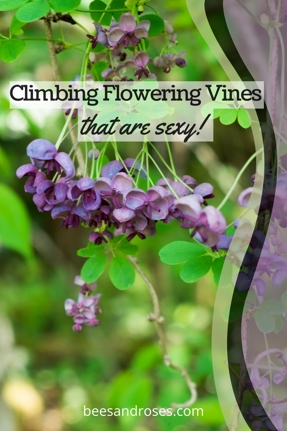 Looking to liven up your yard? Check out these five fast growing climbing perennial vines. These all look stunning and you'll appreciate how fast they grow! #beesandrosesblog #garden #perennialgardening