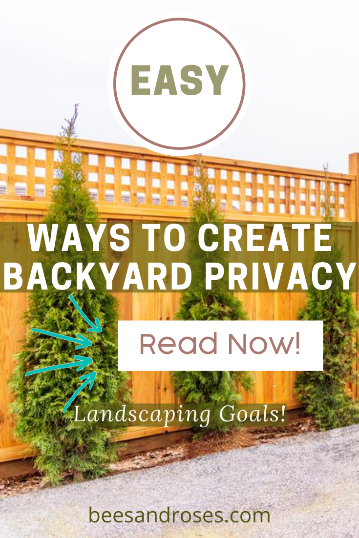 "Fences are not for everyone. You've heard it said ' Don't fence me in"". IF you prefer the look of something besides a fence, but still would like privacy, read this post. There are so many options with plants to create a beautiful more natural looking wall of privacy. Read on for more info. #privacyideas #privacyplants #beesandrosesblog"