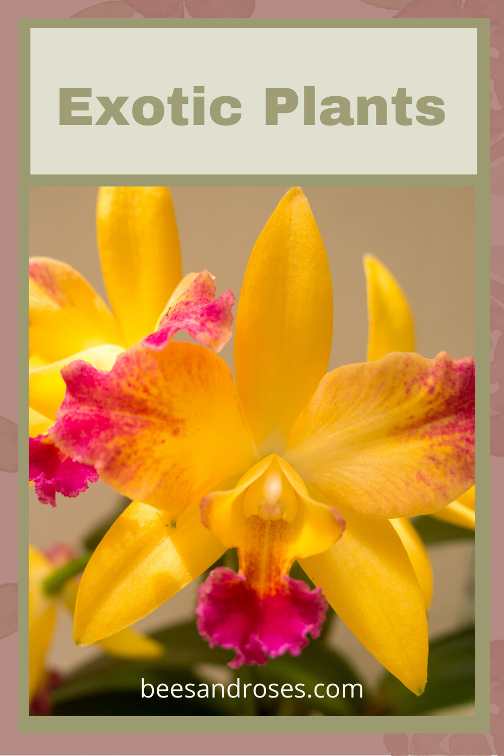 Whenever I visit a tropical location, I am in awe of the gorgeous plants vibrant flowers. Since I live in a dry climate, I used to think I could not get them to grow in my garden. After doing some research, I learned I could make them grow. Read this post to learn which exotic plants you can grow. #exoticplants #tropicalplants #gardeningtips #beesandrosesblog
