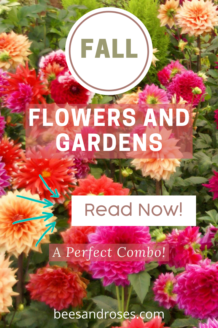 Just because summer has come and gone, you don't have to give up on beautiful flowers. Learn all about the perfect fall combination with flowers, and pots by reading this post. Fall, flowers and gardens go together like PB and Jelly. #fallgardening #flowers #gardens #beesandrosesblog