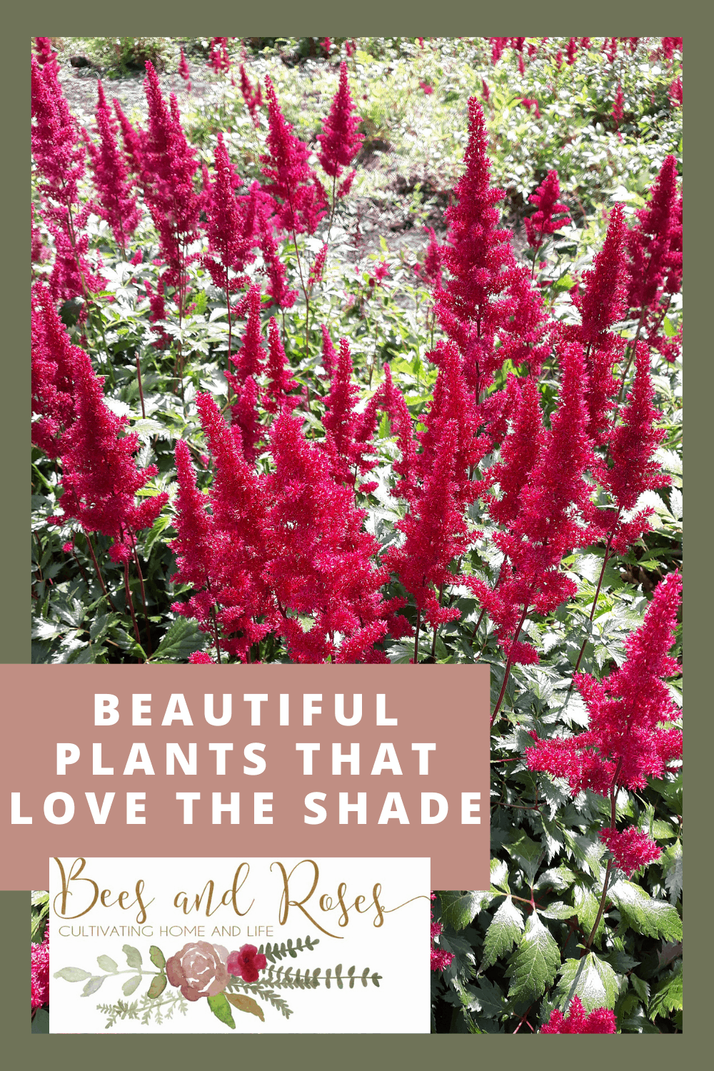 Beesandroses.com makes gardening easy and accessible for everyone! Find the best plants for your lifestyle. These shade-loving plants are gorgeous and easy to keep alive!
