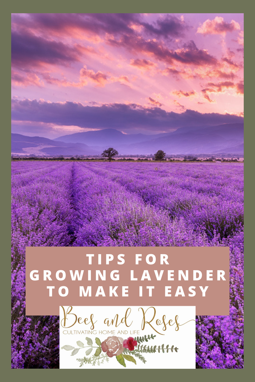 Beesandroses.com teaches all about gardening. Learn how to grow lavender from the best gardeners. These Tips for growing lavender are just what you need for success when growing such a beautiful plant.