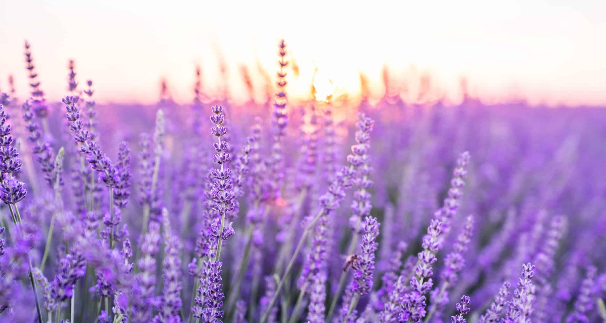 Best Smelling Plants, Garden Ideas, Gardening Ideas, Plants, Plant Care, Indoor Gardening, Indoor Garden, Houseplant Care